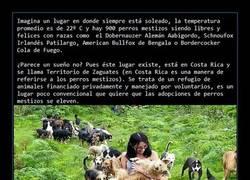 Enlace a Territorio de Zaguates: el paraíso de los perros mestizos. Perros everywhere
