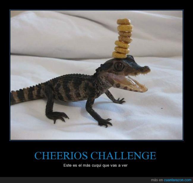 animal,cheerios,reptil