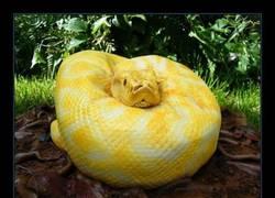 Enlace a Las serpientes no son de fiar