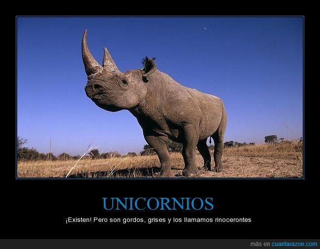 animales,fauna,rinoceronte,unicornio