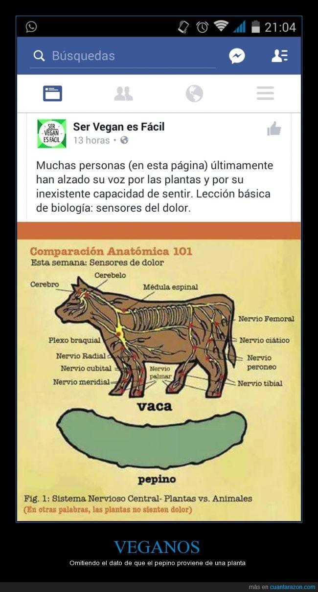 Pepino,planta,vaca,veganos