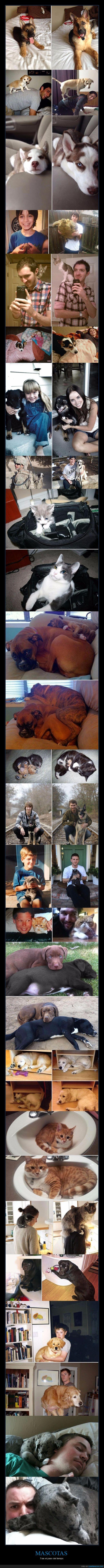 adultos,cachorros,crecer,mascotas