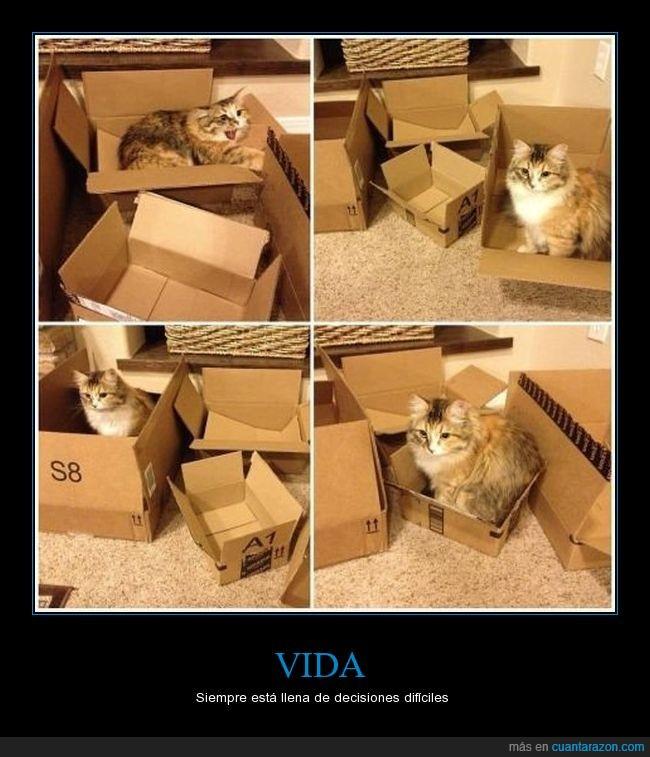 cajas,decidir,decisión,gato
