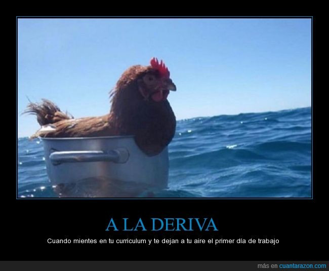 cubo,gallina,mar,trabajo