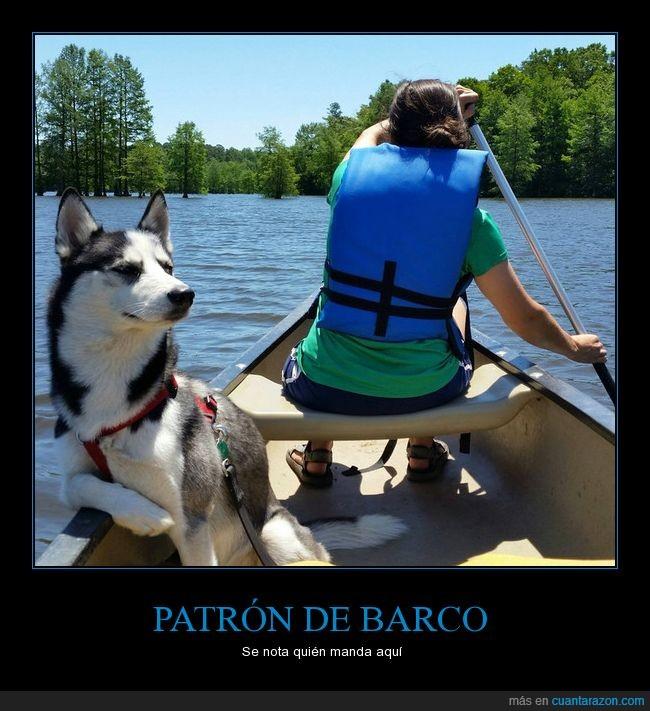 barca,husky,mandar,navegar,perro