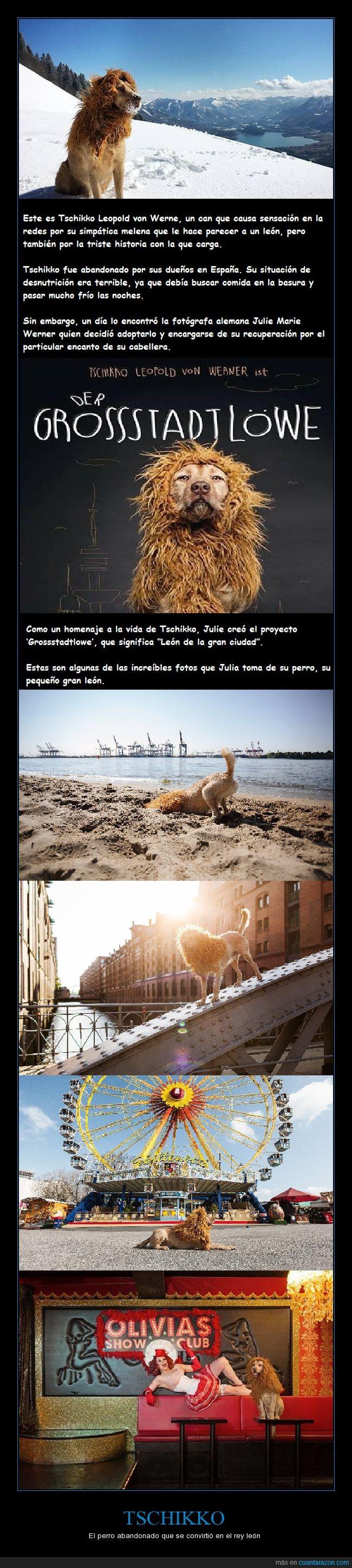 abandono,Alemania,fotografa,león,perro,rescate,Tschikko