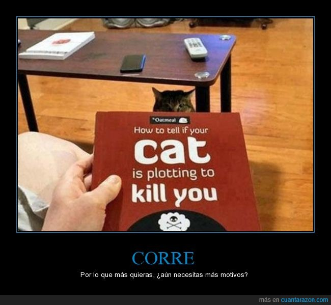 gato,matar,tratar