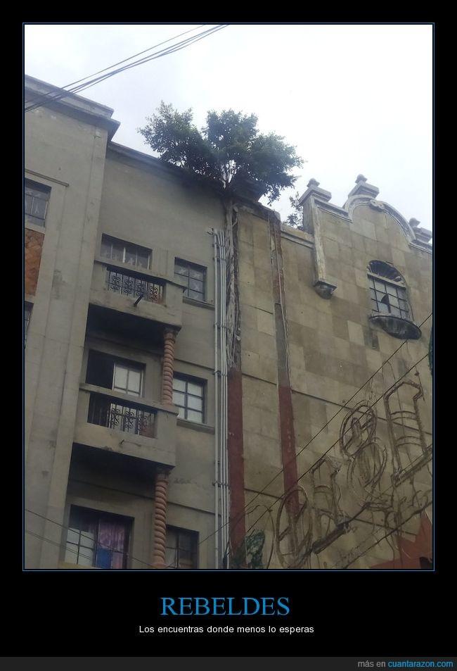 altura,arbol,edificio