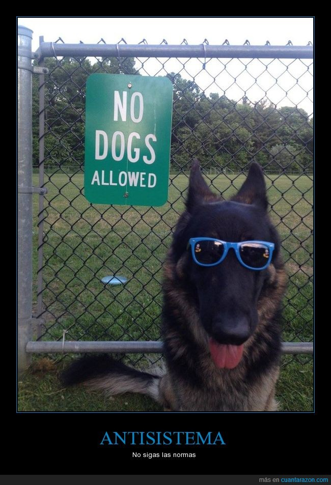cartel,gafas,matón,no dogs allowed,perro