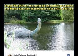 Enlace a ÚLTIMA HORA: El monstruo del Lago Ness ha sido encontrado muerto