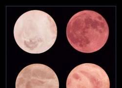 Enlace a ¿Podrías distinguir la luna de estas lonchas de mortadela?