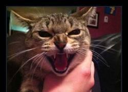 Enlace a El gato menos fotogénico del mundo [13 fotos lo demuestran]