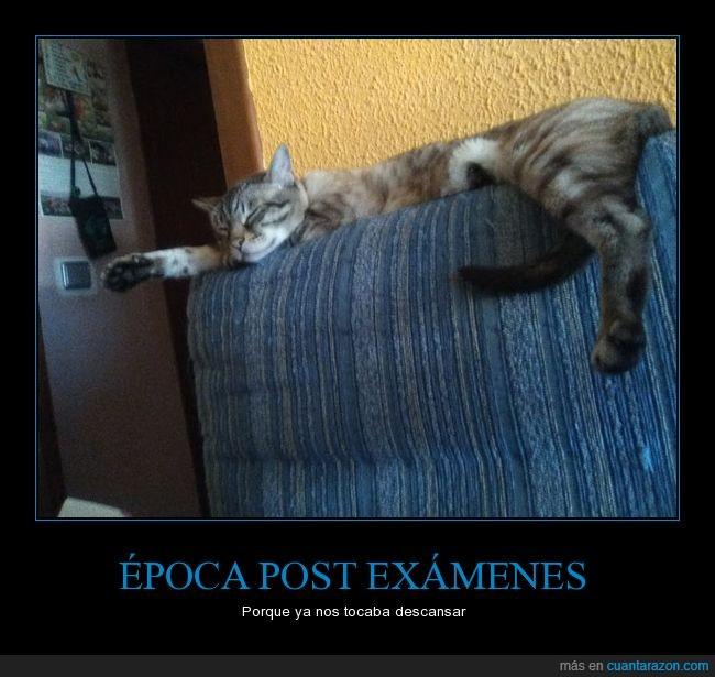 descansar,exámenes,gato,sofá