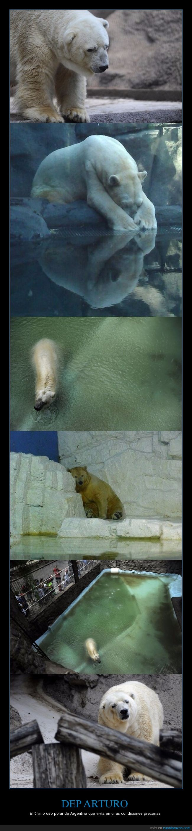 argentina,arturo,dep,oso polar,rip