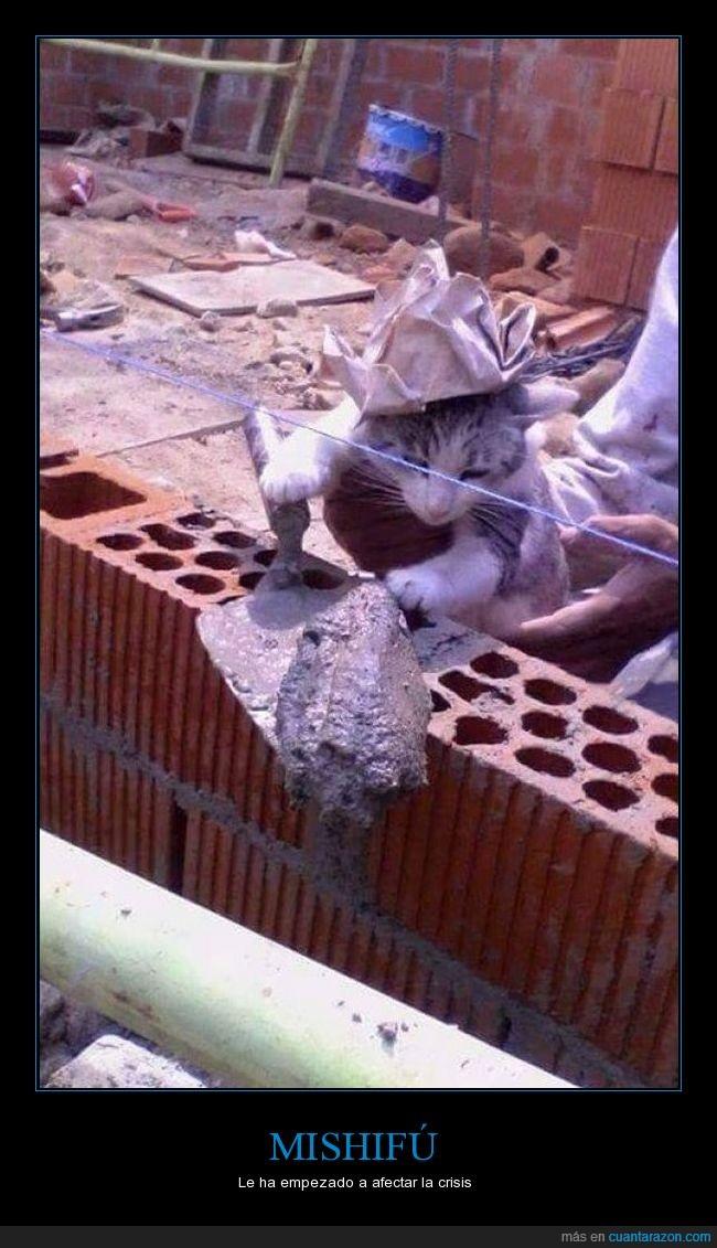albañil,crisis,gato,trabajar