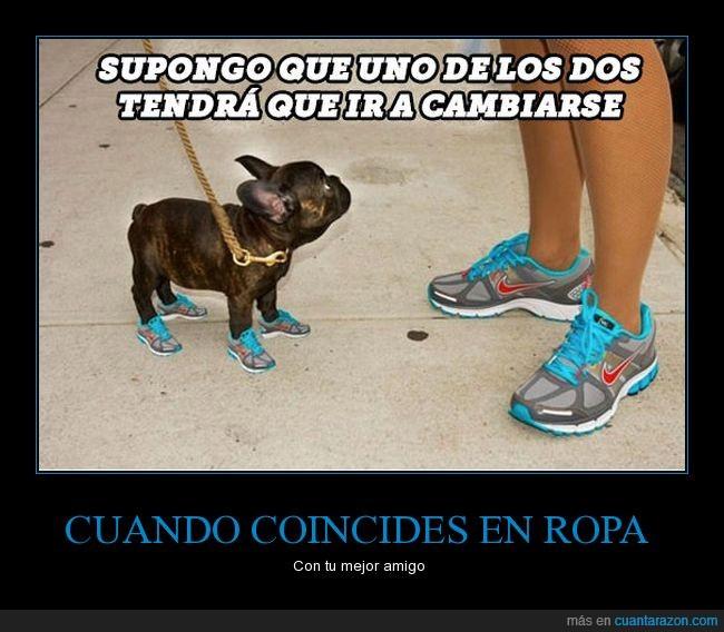 bambas,coincidencia,igual,perro,ropa,zapatillas