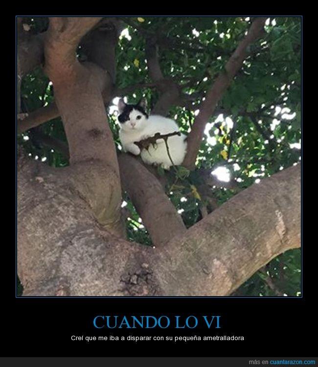 árbol,felino,gato,ilusión óptica,rama