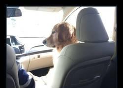 Enlace a Cuando tu perro no te deja sentar en el asiento de delante