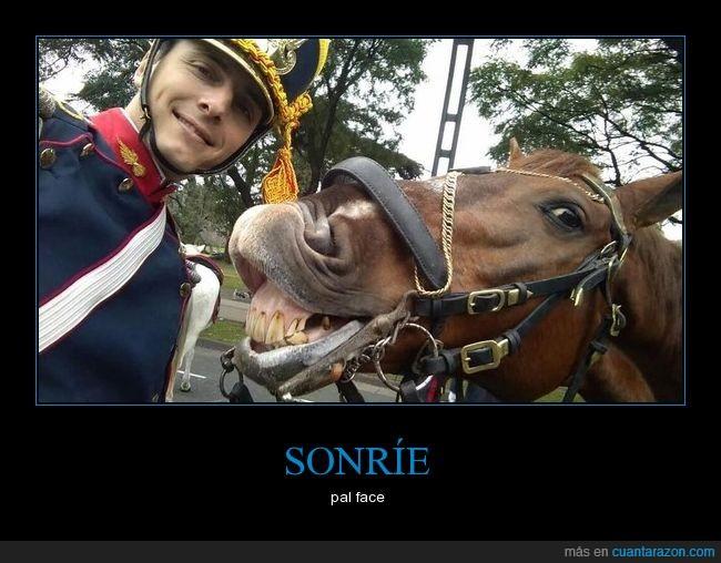caballo,face,granadero,soldado,sonrie