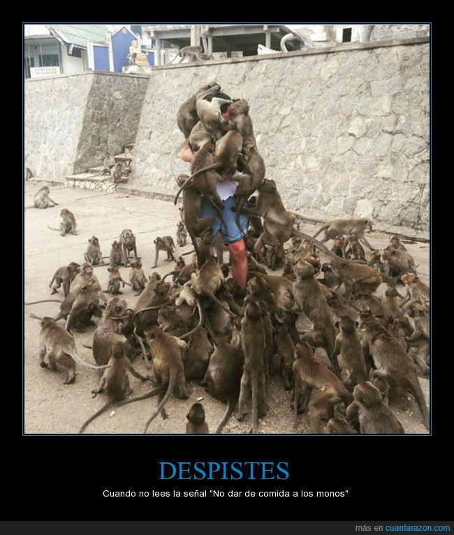 asalto,invasión,monos