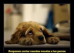 Enlace a Proponen cortar cuerdas vocales a los perros para que sus ladridos no molesten