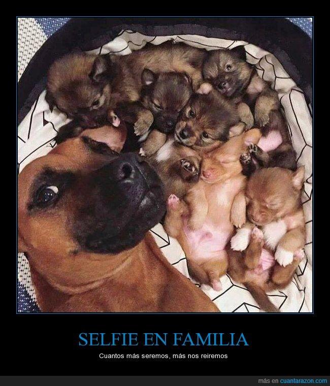 cachorros,canes,perros,selfie