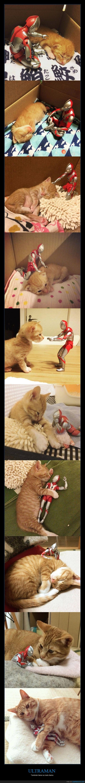 gato,juguete,robo,ultraman