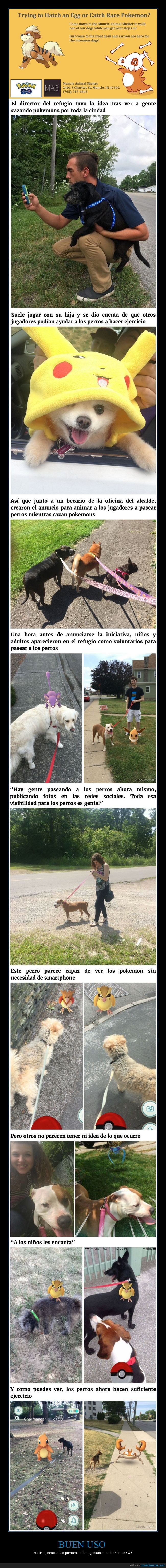 pasear,perrera,perros,pokemon go,refugio animal