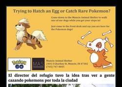 Enlace a Refugio para perros tiene una genial idea para viciados a Pokémon GO