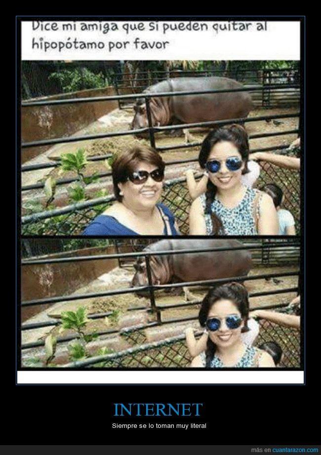 foto,gorda,hipopótamo,photoshop,sacar