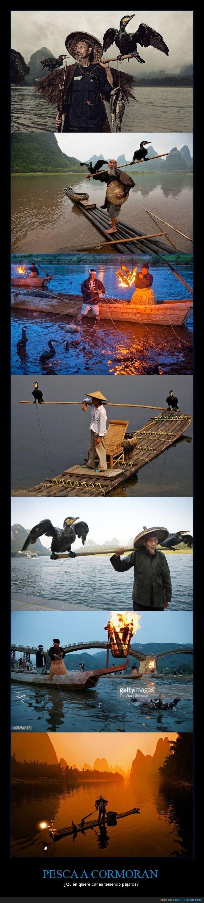 Ave,China,Cormoran,Pájaro,Pesca,Yangshou