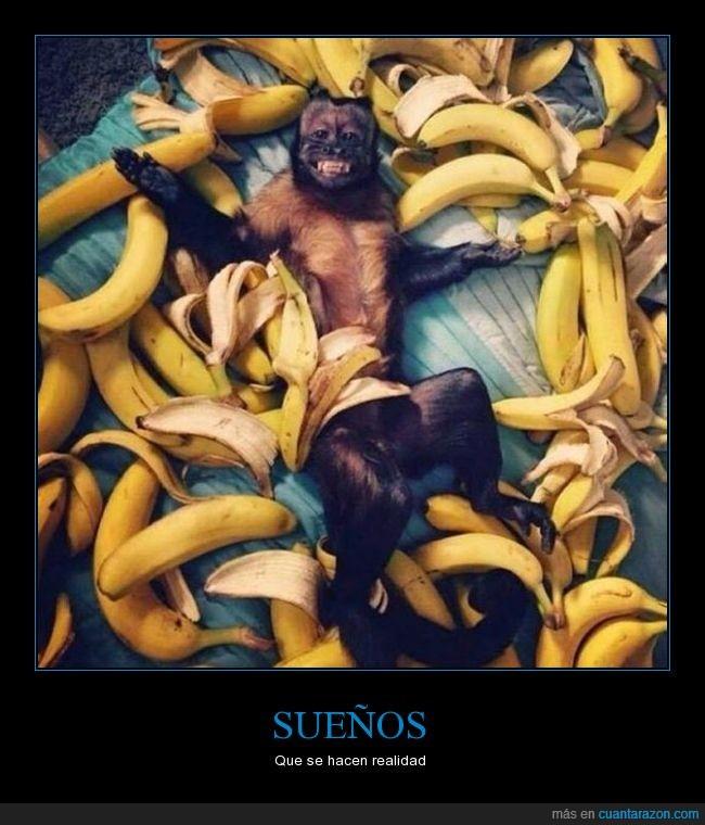 bananas,macaco,mono,plátanos,primate