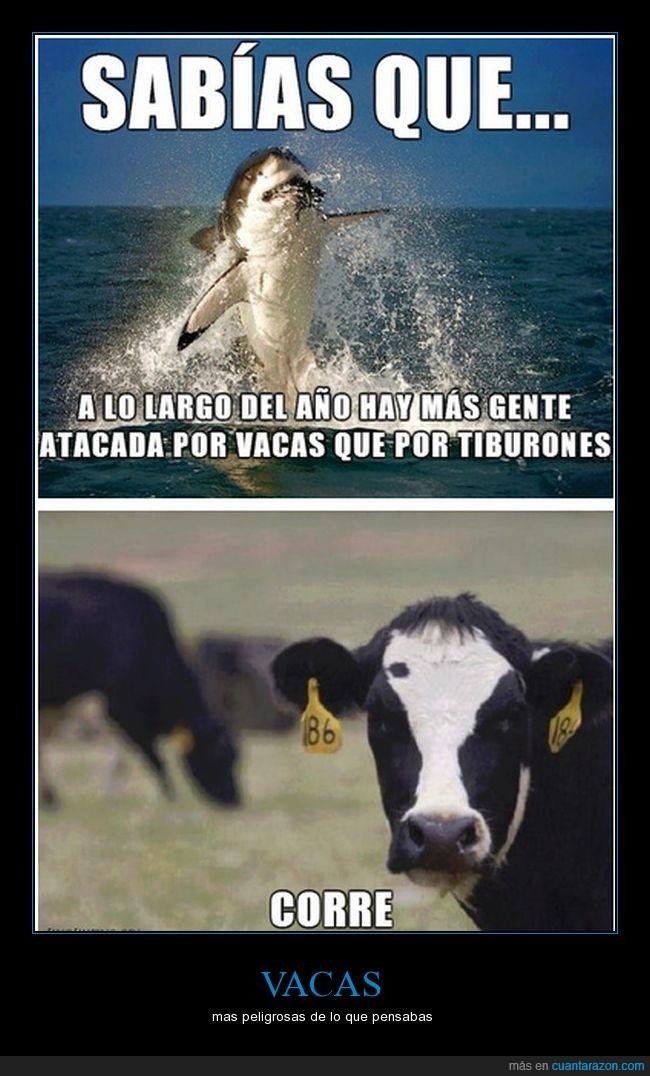 retretes,tiburones,vacas