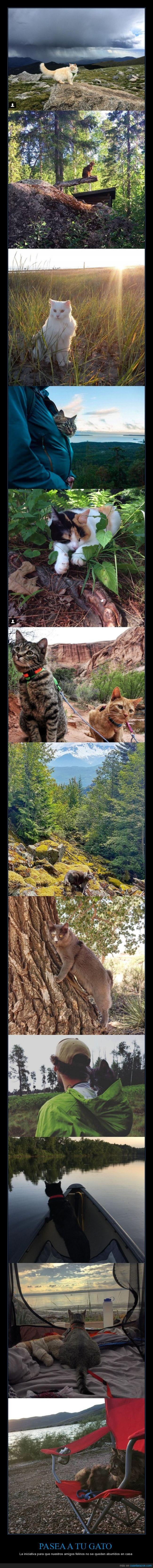 camping,gatos,pasear