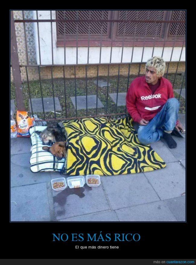 ayudar,comida,perros,vagabundo