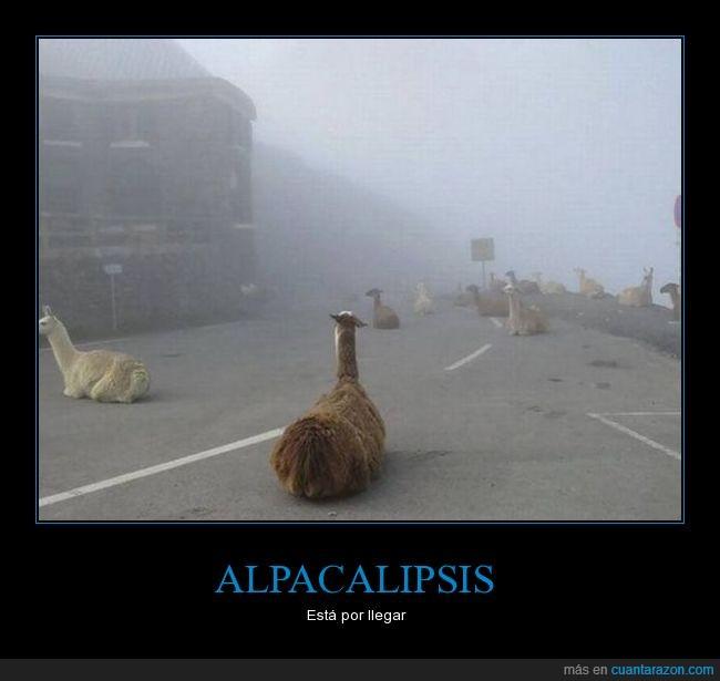 alpaca,apocalipsis,invasión
