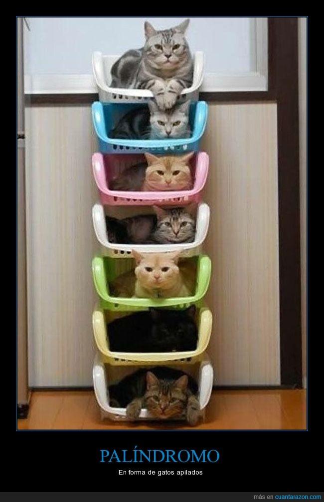columna,gatos,iguales