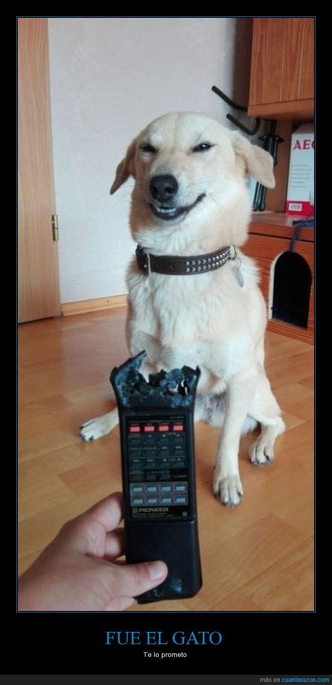 gato,mando a distancia,perro