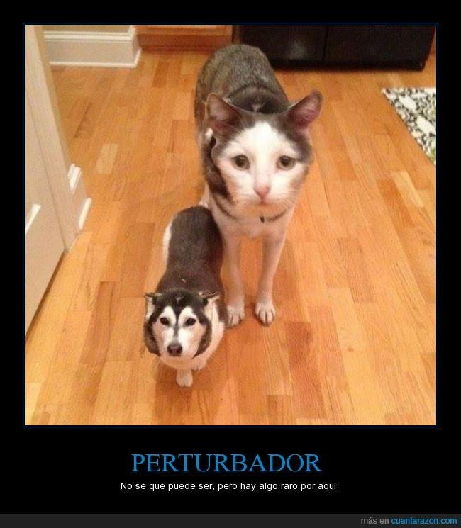 can photoshop,faceswap,felino,gato perro