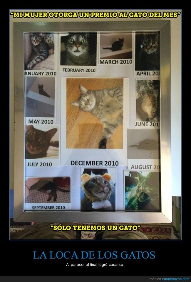 fotos,gato,gatos,loca,mascota