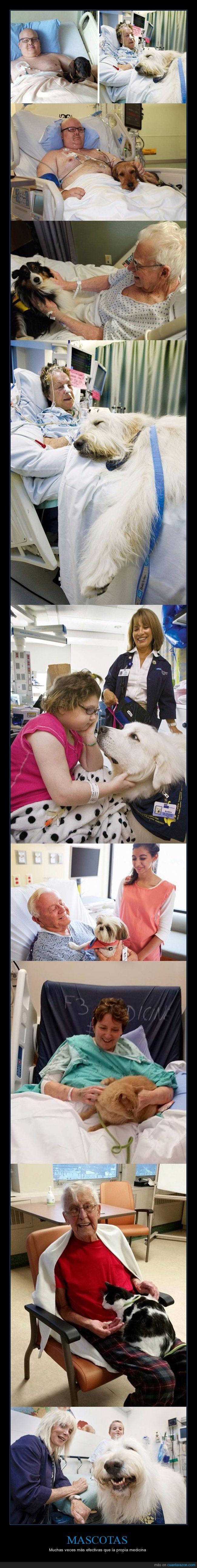 hospital,mascotas
