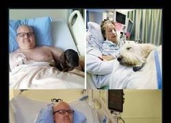 Enlace a Este hospital permite que las mascotas visiten a sus amos enfermos para una más rápida recuperación