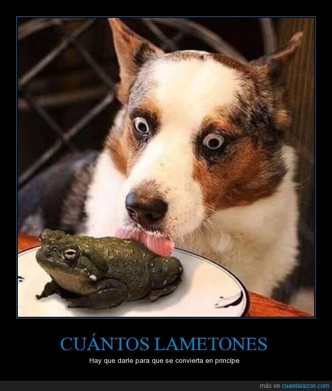 lamer,perro,sapo