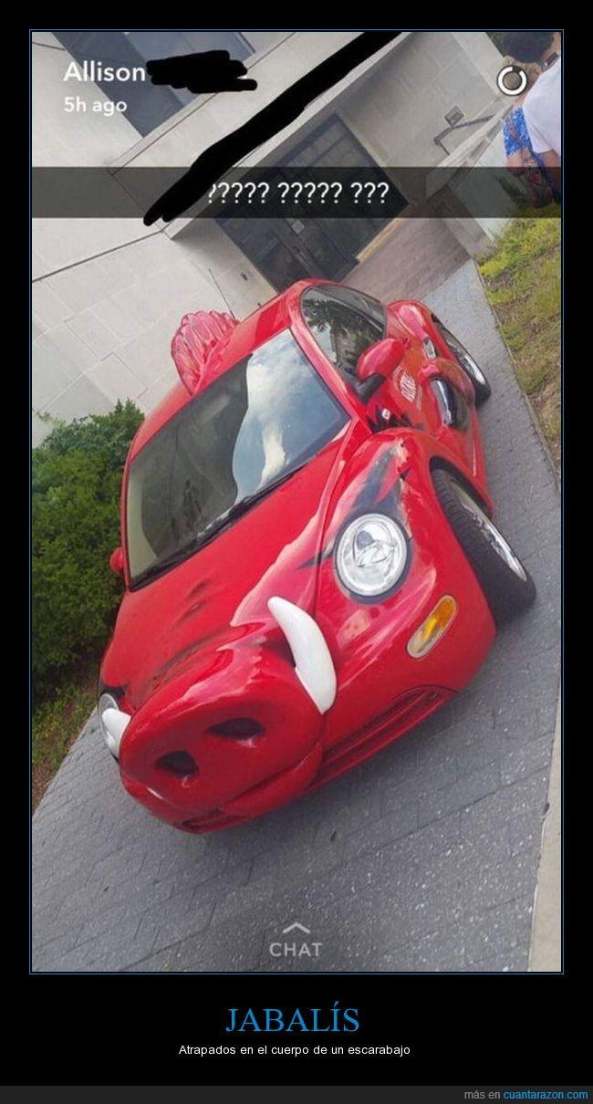 beetle,coche,escarabajo,jabalí,tunning,wtf