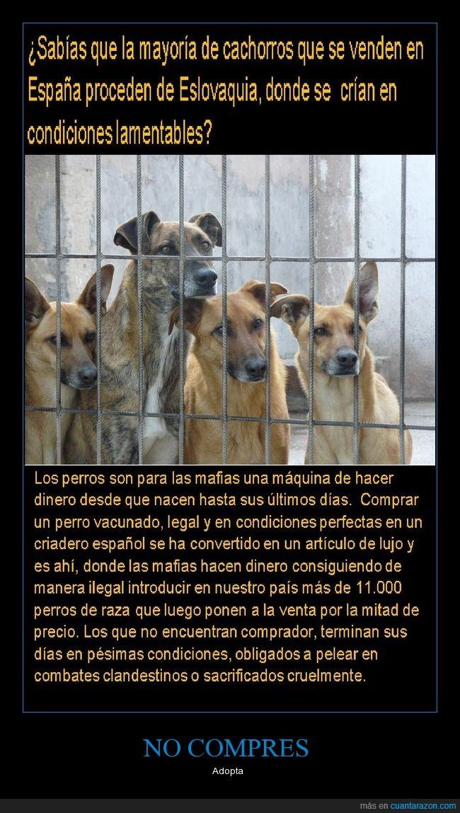 cachorros,comprar perros,cuatro,mafias