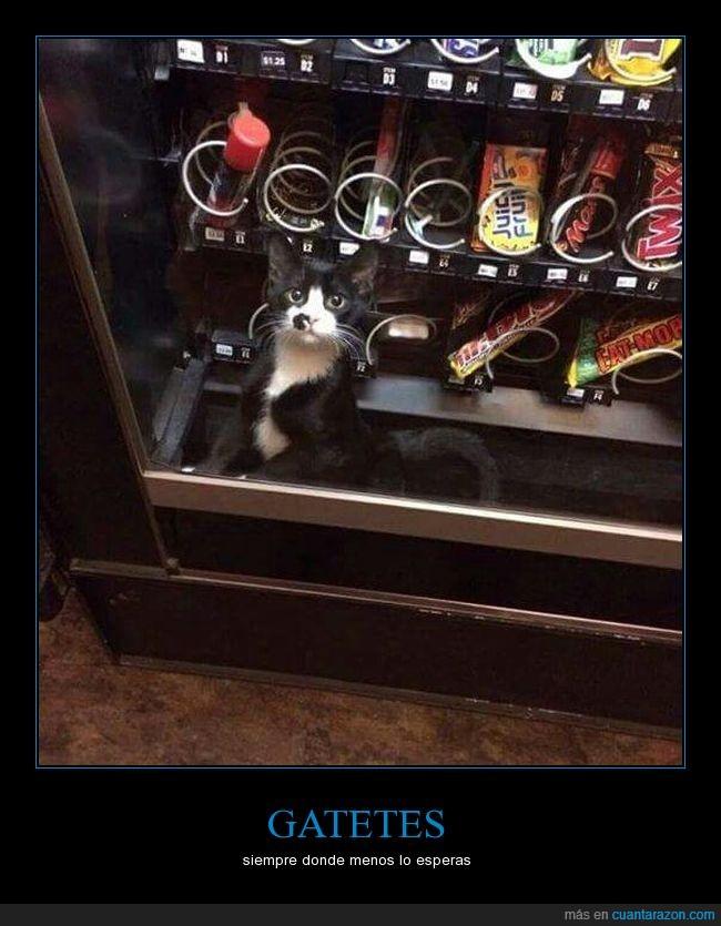 dentro,expendedora,gato,máquina,vending