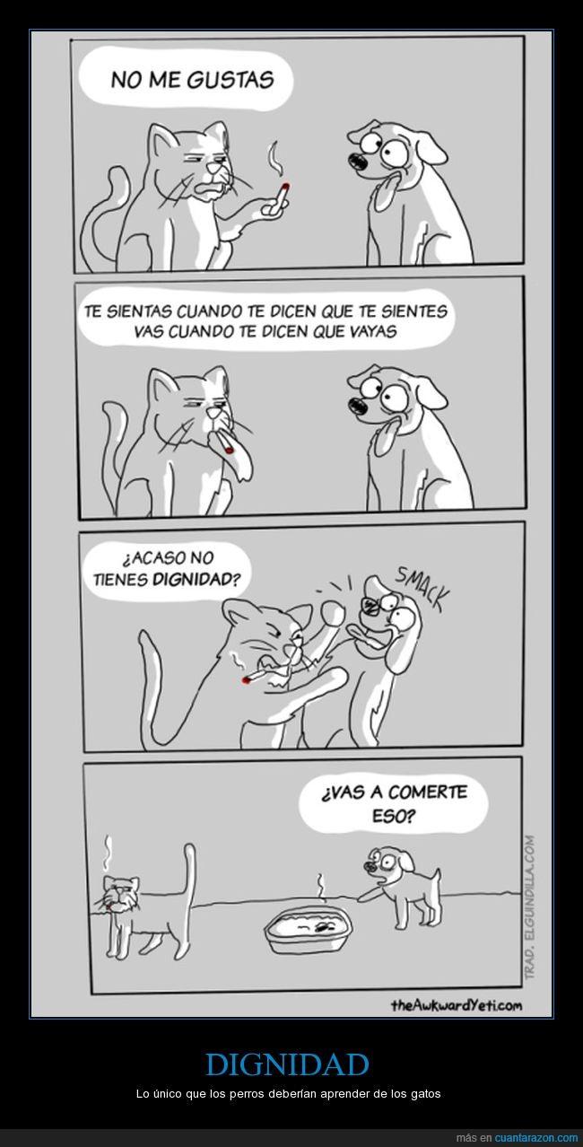 diferencias,dignidad,gatos,perros