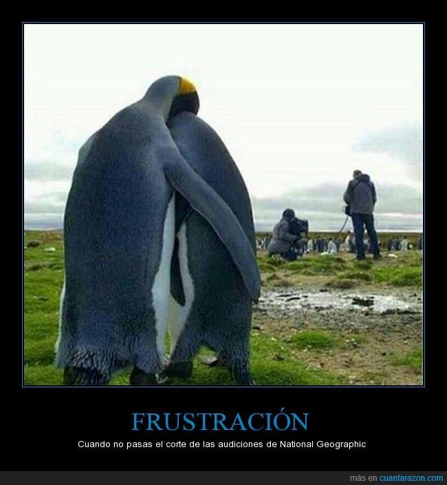 bajon,corte,national geographic,pingüinos