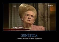 Enlace a GENÉTICA