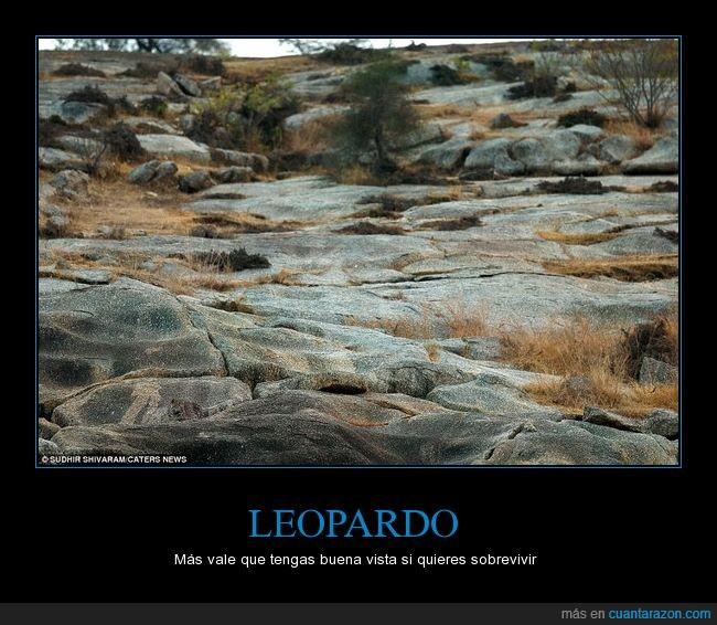 árboles,desierto,Escondido,ilusión óptica,Leopardo,rocas,sobrevivir,visión